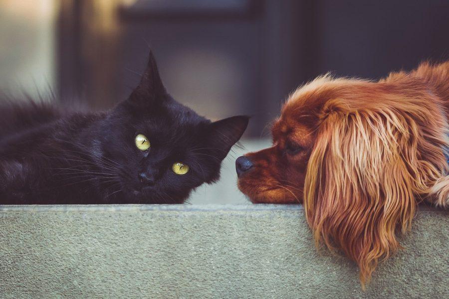 huisdieren op reis
